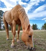 horse in Bellaire, Texas