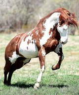 horse as vacation in Pearland, Texas