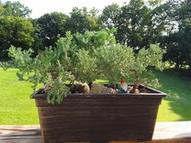Outdoor and Indoor plants, some Free in Fort Campbell, Kentucky