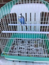 Wanted large bird cage in Chicago, Illinois