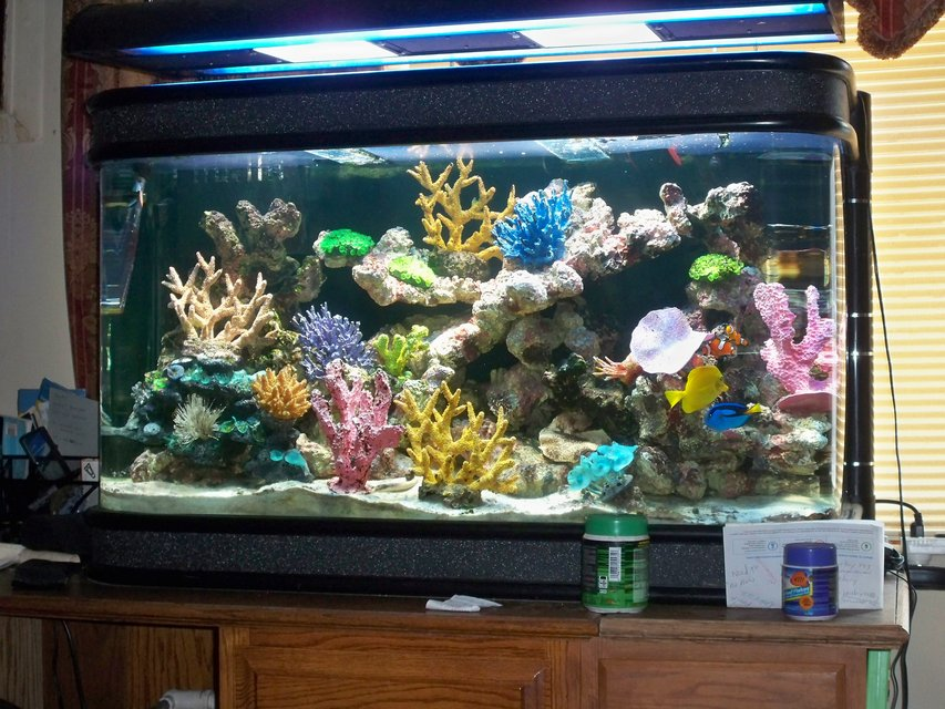 Fish tank games 90 gallon sale 90 gallon bowfront fish for 90 gallon fish tank stand