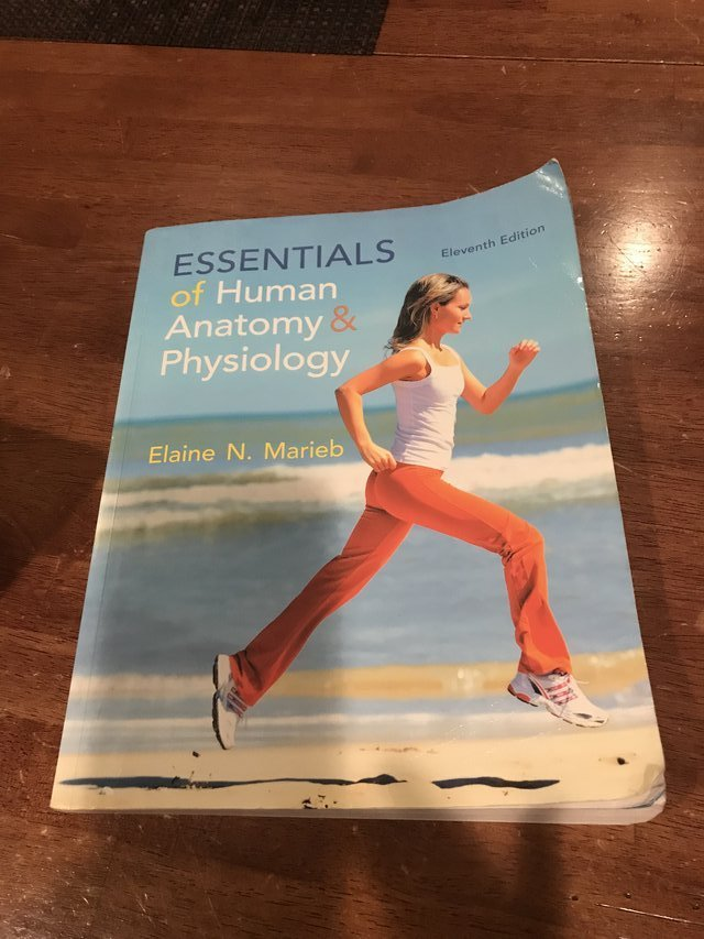 Essentials Of Human Anatomy And Physiology Books Textbooks For